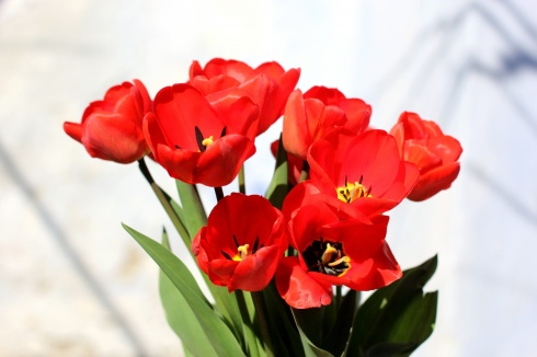 Red spring flowers